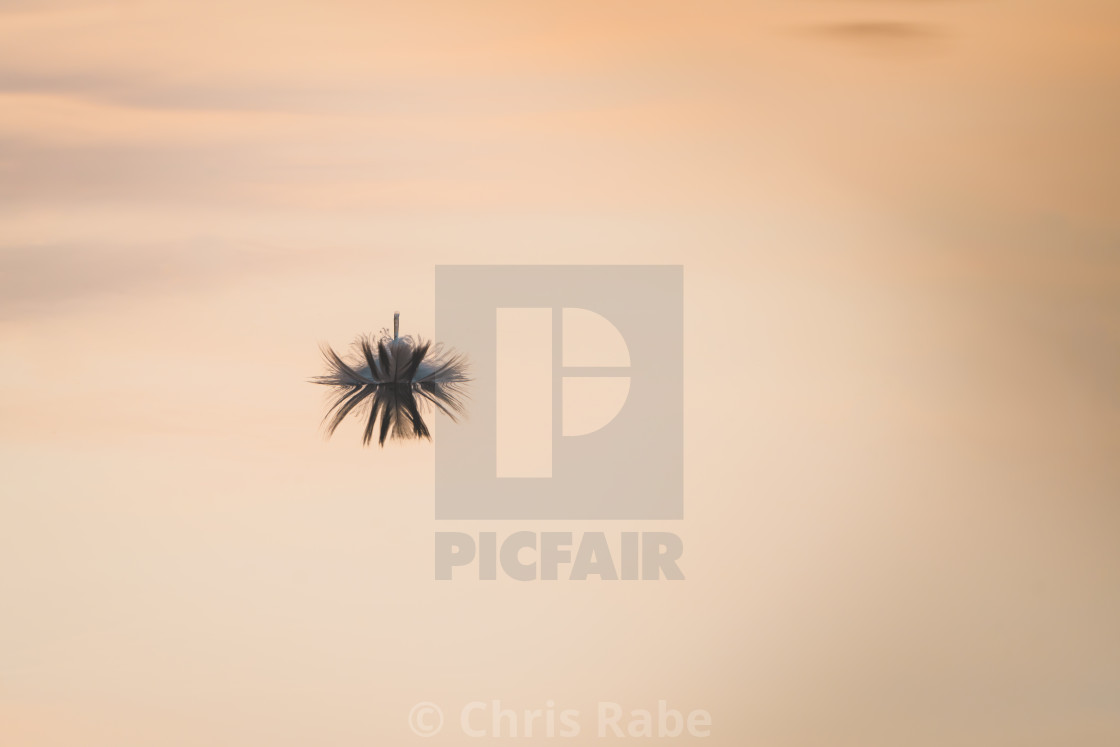 """A feather floating on the River Thames"" stock image"