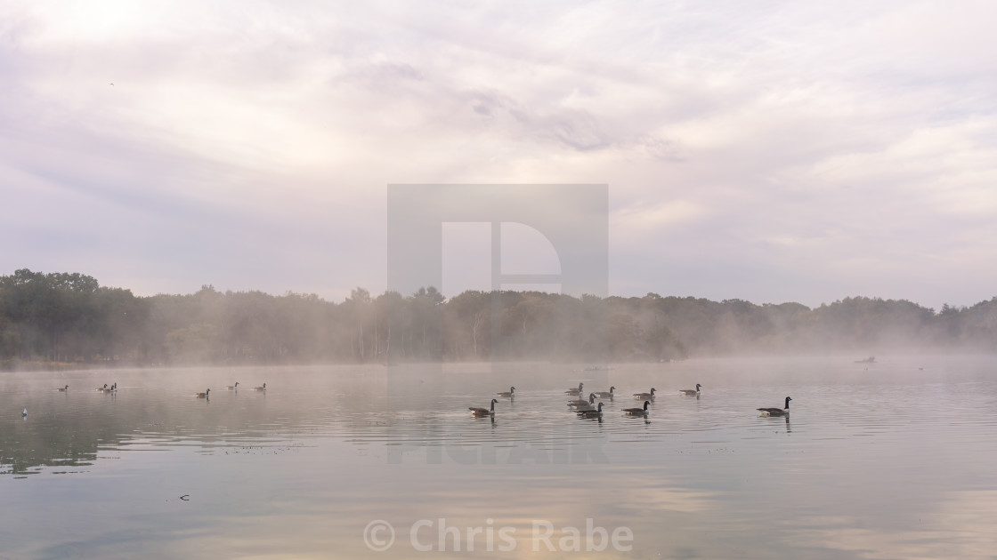 """Small flock of Canada Goose (Branta canadensis) on a small lake on a foggy..."" stock image"