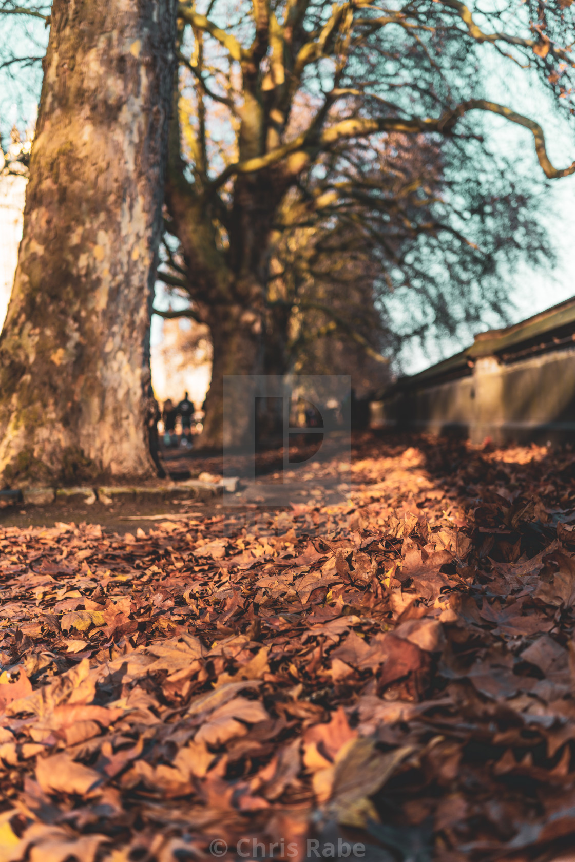 """London, England - November 29 2019 : The last of the Autumn leaves along the..."" stock image"