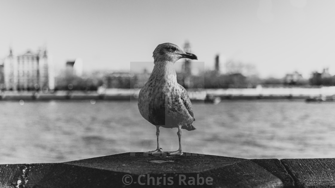 """""""A gull sitting on the Thames wall on a bright winter day in London with..."""" stock image"""