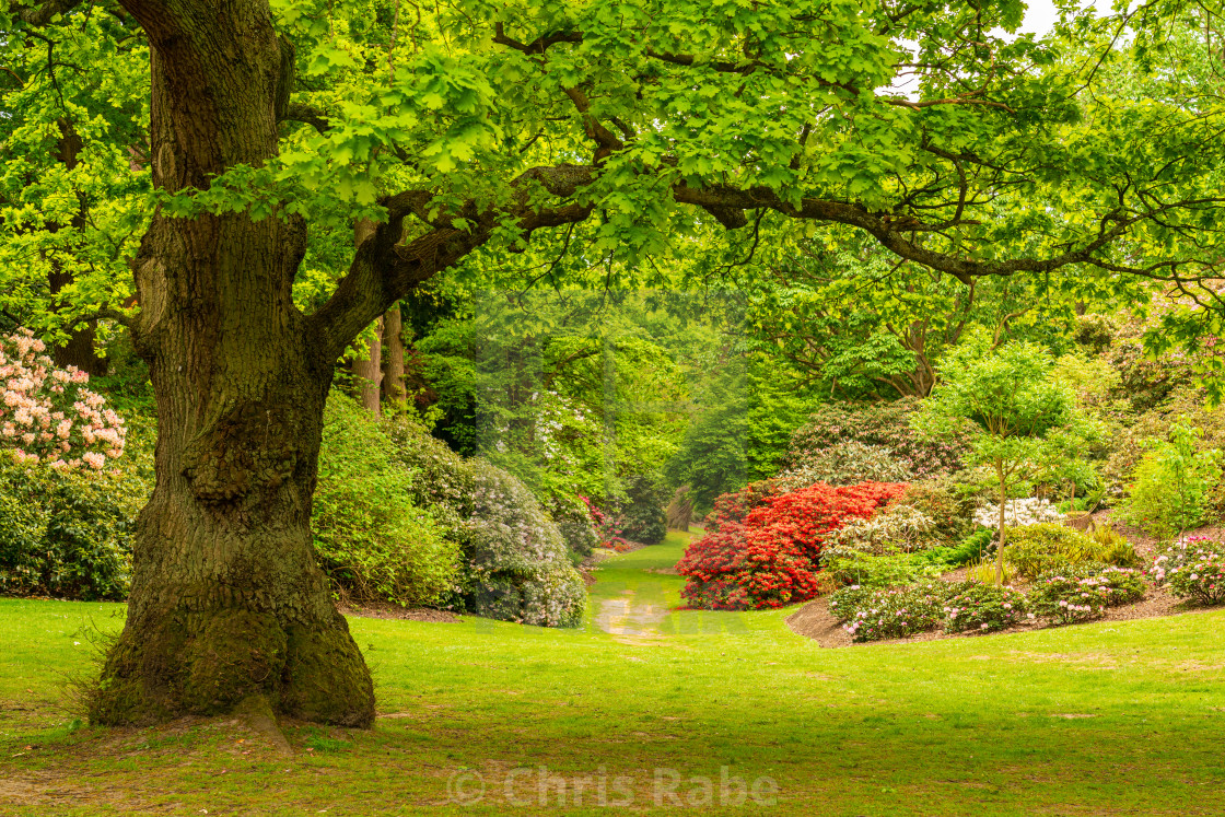"""""""The Valley Gardens at Virginia Water Lake in Windsor Great Park, England"""" stock image"""