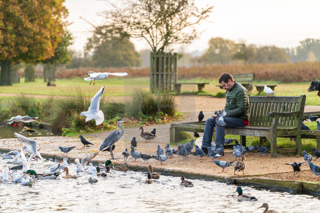 """London, England - November 3 2019 : A man sits lone on a bench in Bushy Park..."" stock image"