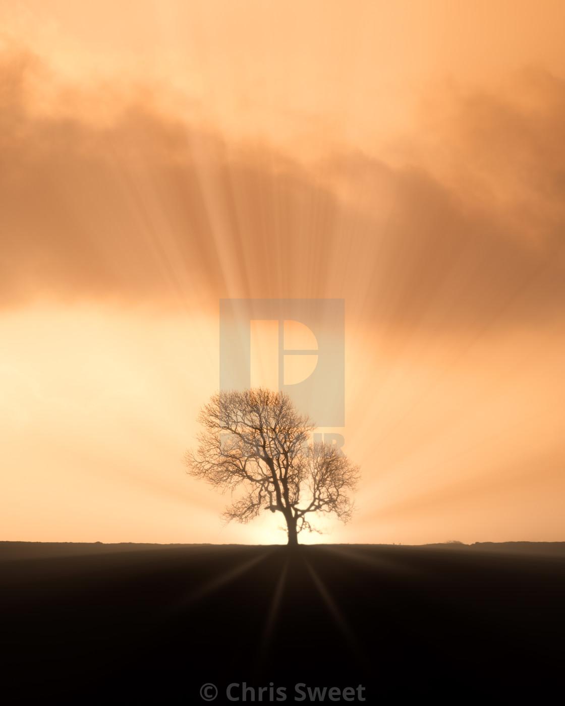 """The Sunburst Tree"" stock image"