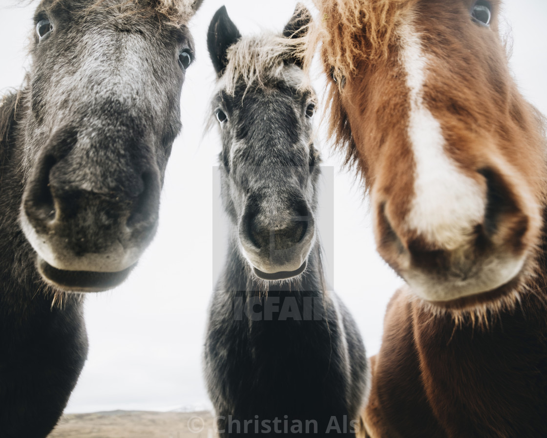 """HORSE ALBUM COVER"" stock image"
