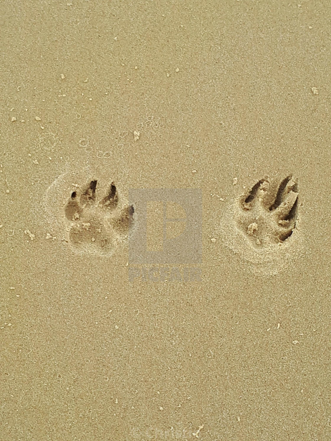 """Paw prints in the sand"" stock image"