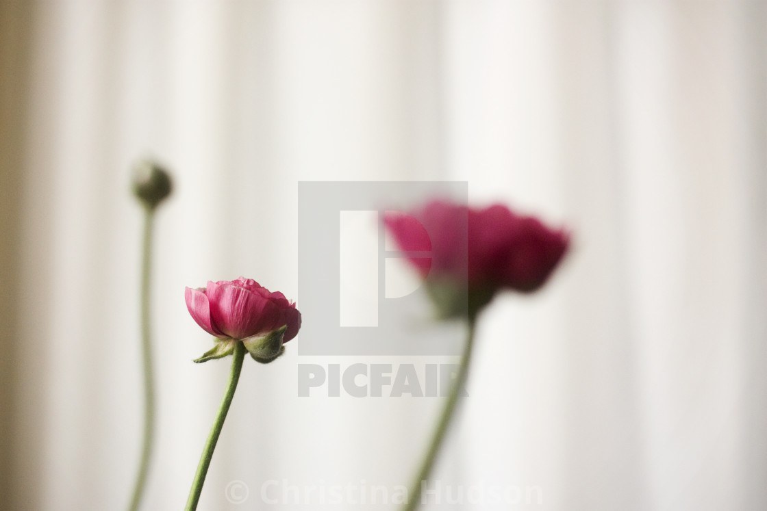 """Pink Flower"" stock image"