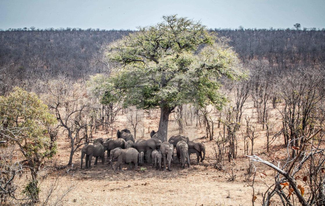 """""""Elephant seeking shade"""" stock image"""