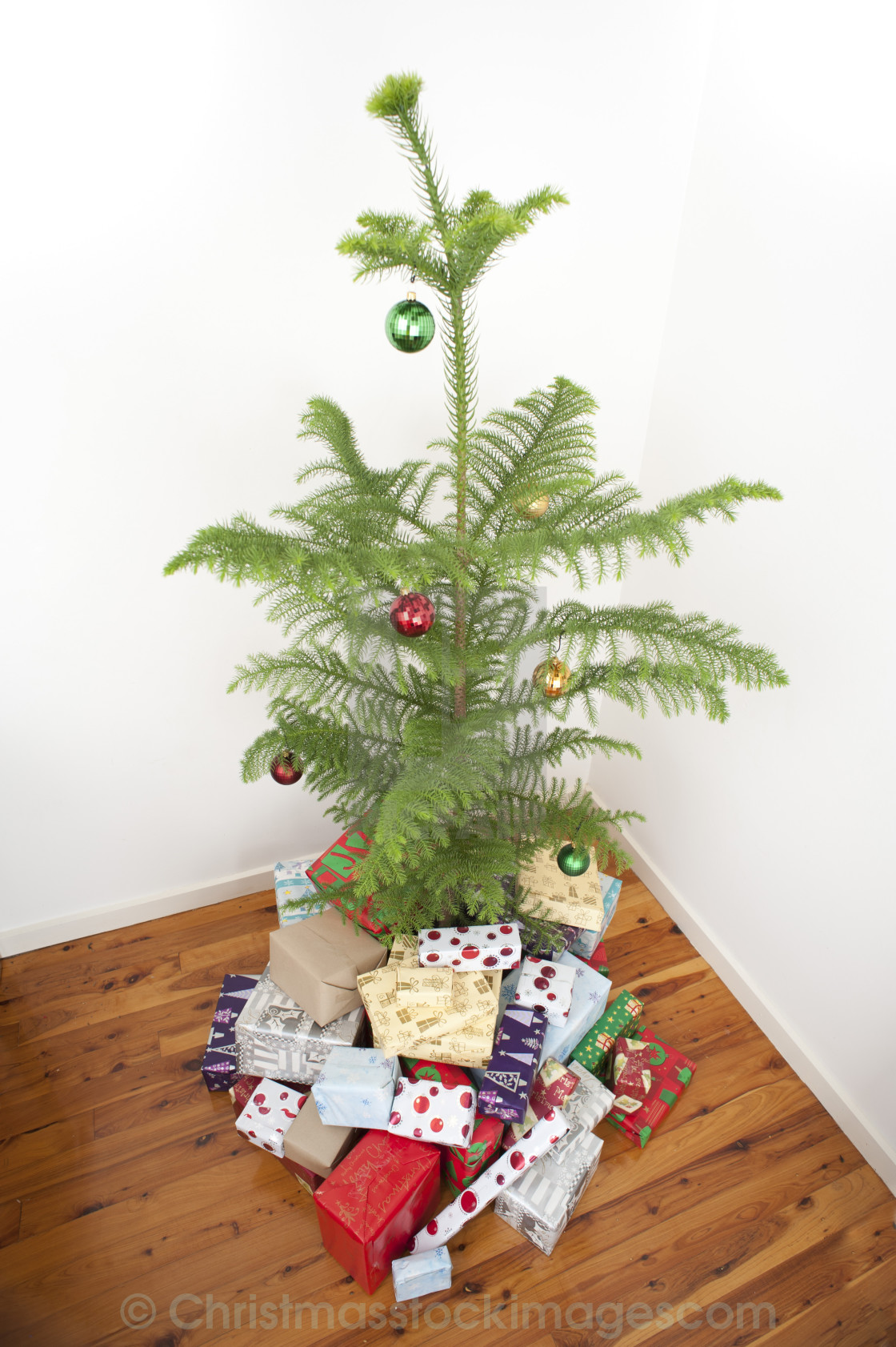 Island Christmas Tree.Norfolk Island Pine Christmas Tree License Download Or