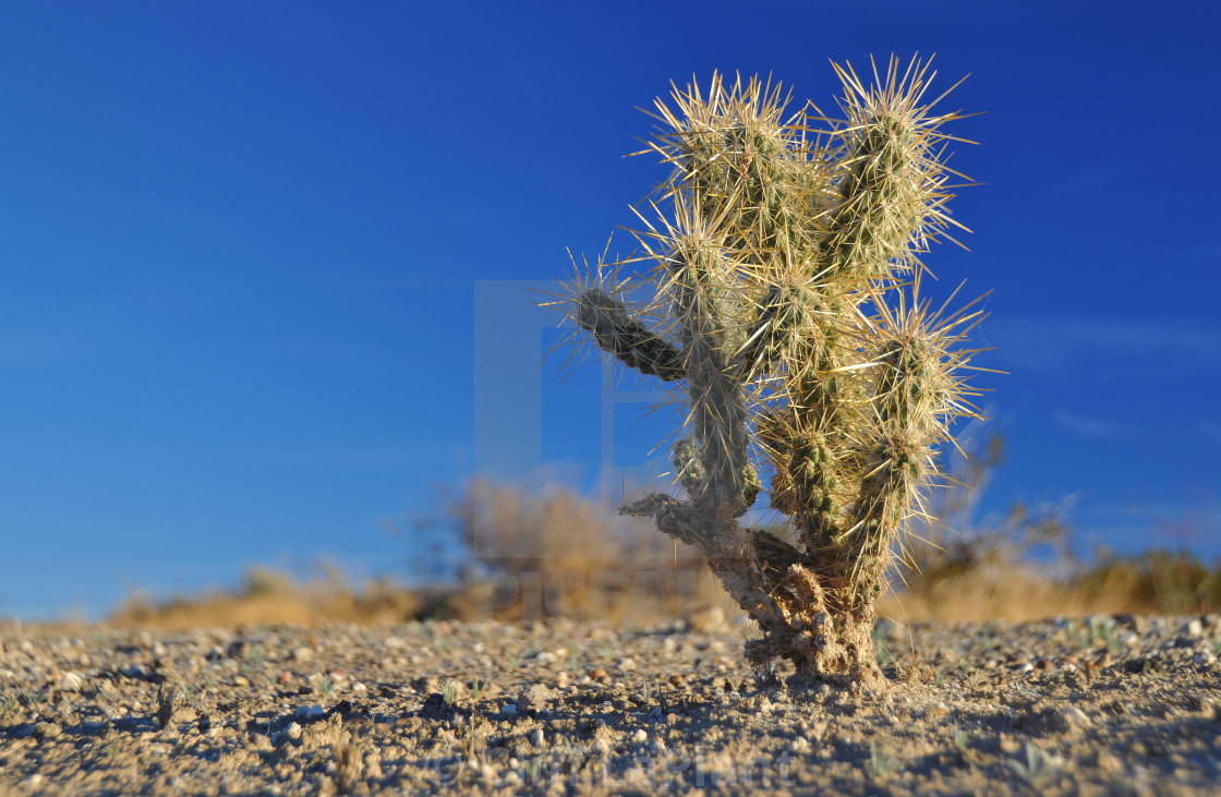 """Small Cactus Up Close"" stock image"