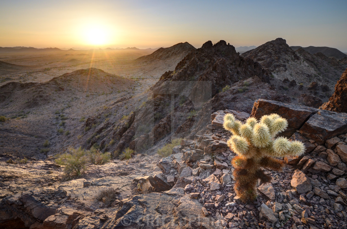 """Baby Cholla Cactus Sunset"" stock image"