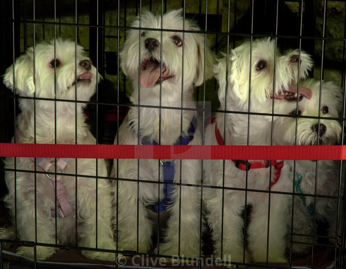 """""""Doggies in the window"""" stock image"""