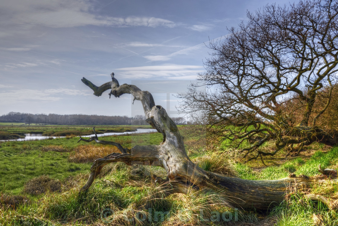 """The Serpent of Alresford"" stock image"