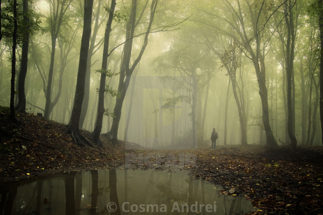"""Man in green mysterious forest with fog on lake edge"" stock image"