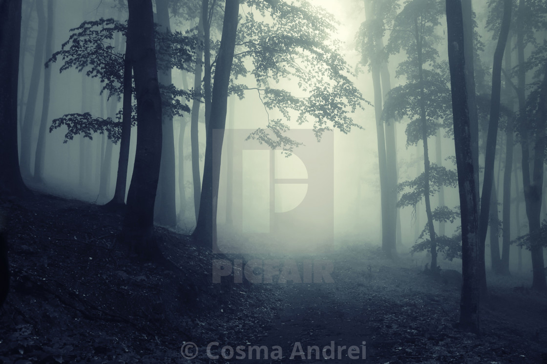"""Fantasy forest with fog"" stock image"