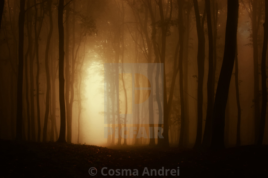 """Sunset in dark mysterious forest with fog on Halloween"" stock image"