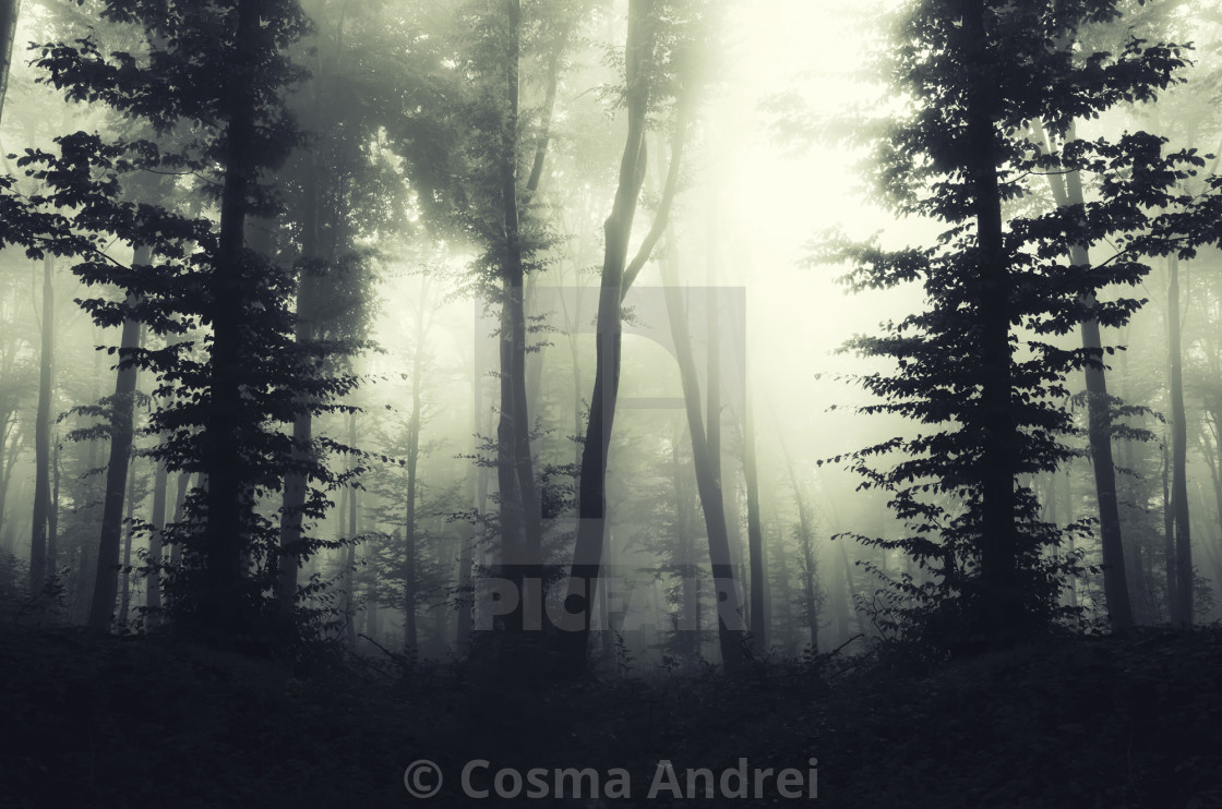 """fantasy forest background, atmospheric landscape"" stock image"