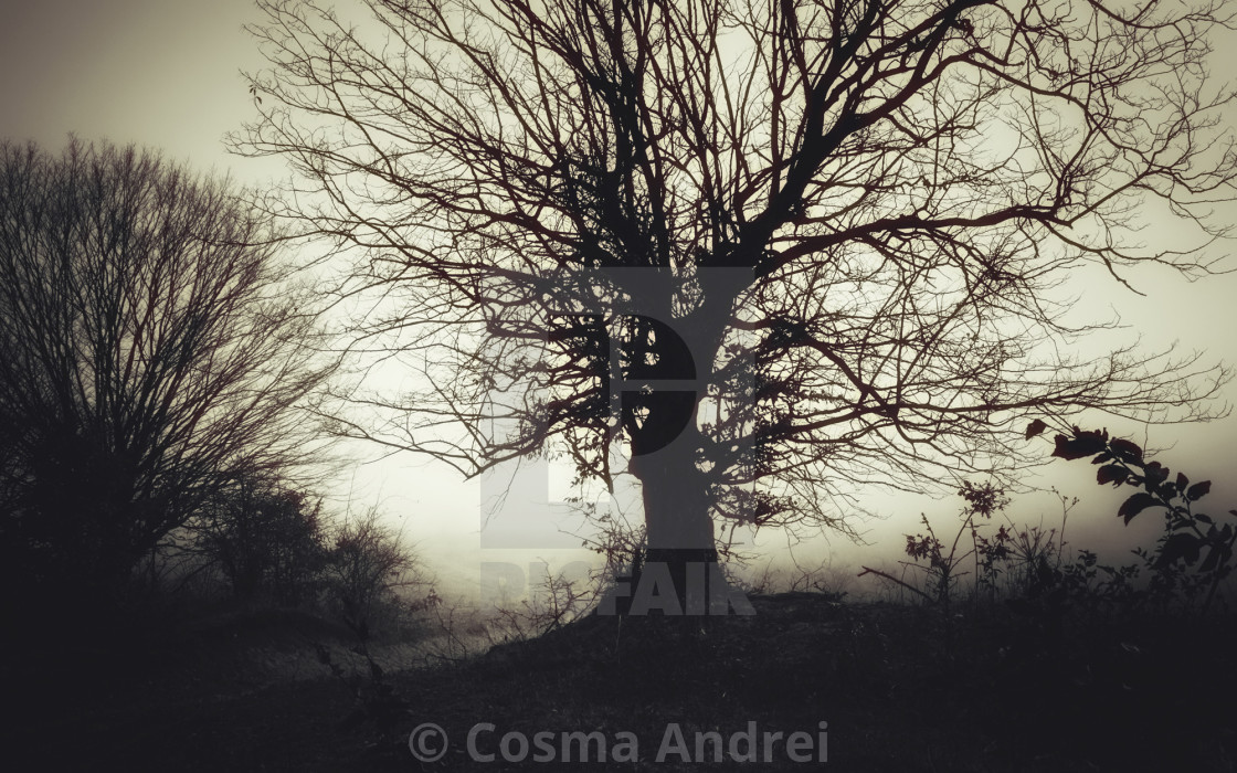 Scary Tree Silhouette In Fog Gloomy Dark Halloween Landscape License Download Or Print For 11 16 Photos Picfair