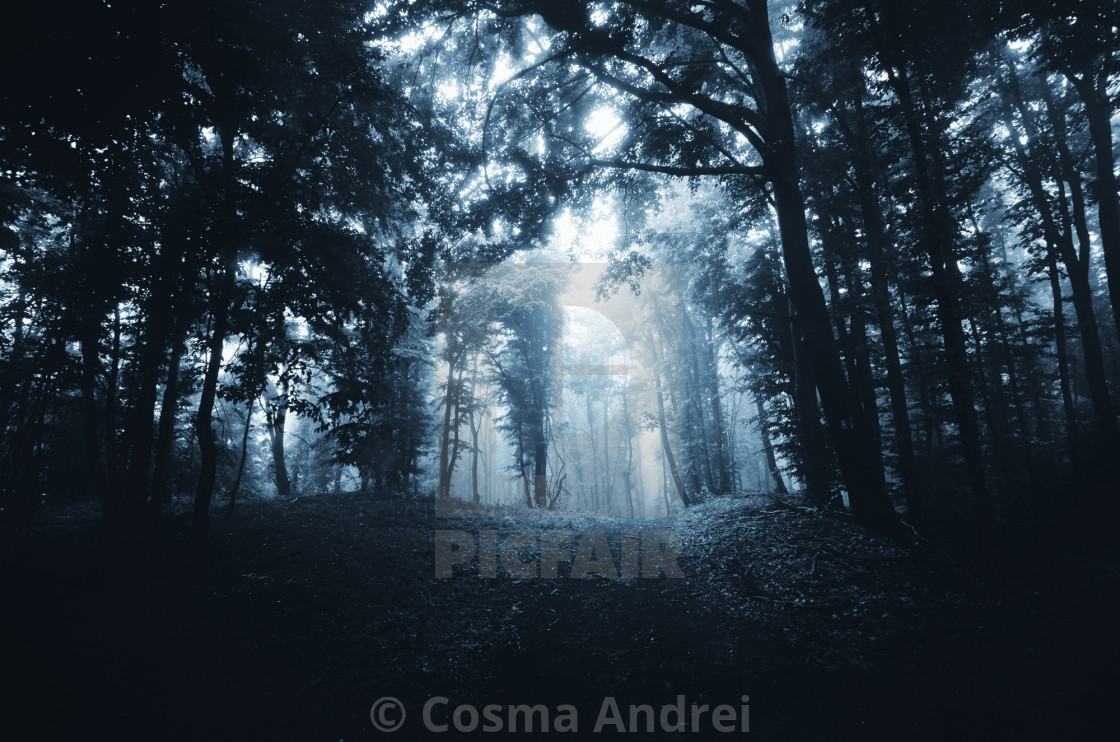 """Dark forest path in fog"" stock image"