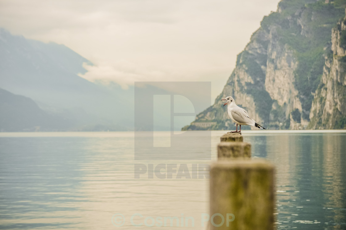 """Lonely Seagull"" stock image"
