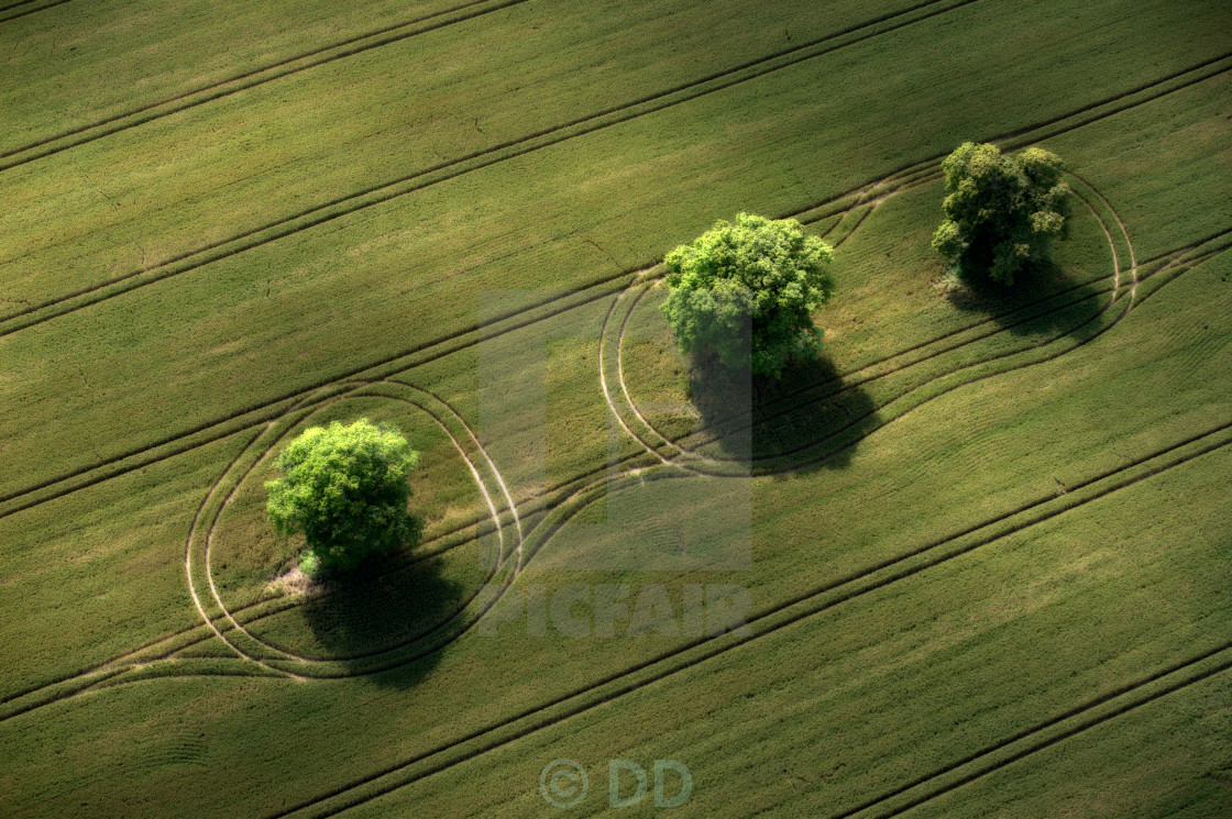 """THREE TREES"" stock image"