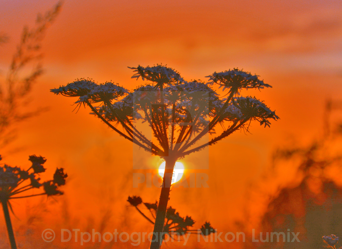 """Flowers at Sunrise"" stock image"