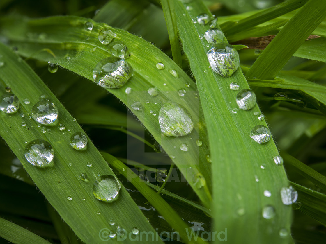 """Raindrops on Grass"" stock image"
