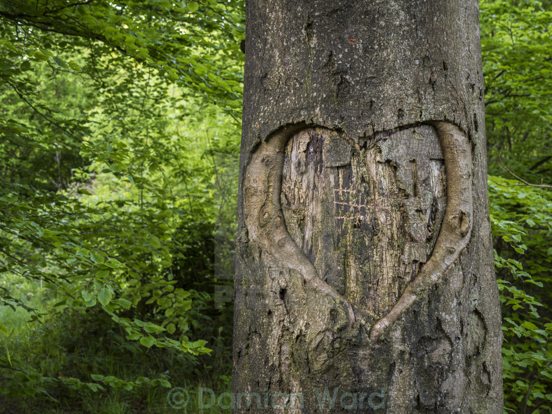 """Tree of Love"" stock image"