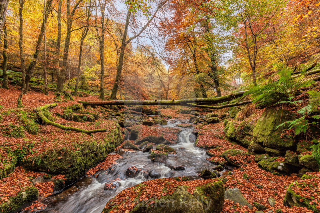 """Autumn in the woods"" stock image"
