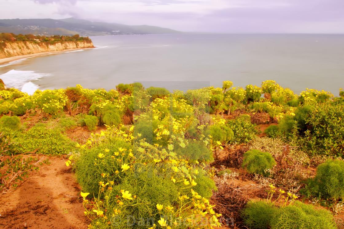 """Wildflowers on a Hillside Califoria"" stock image"
