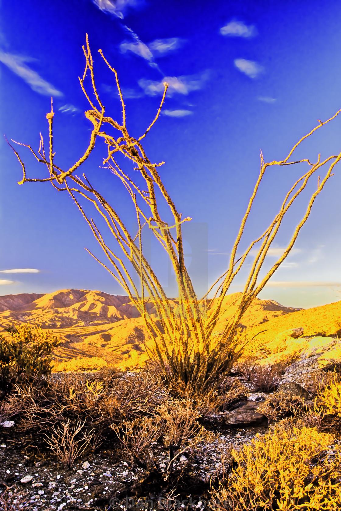 """Sunrise on Ocotillo Anza Borego"" stock image"