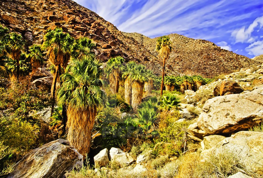 """""""Borrego Palm Canyon"""" stock image"""