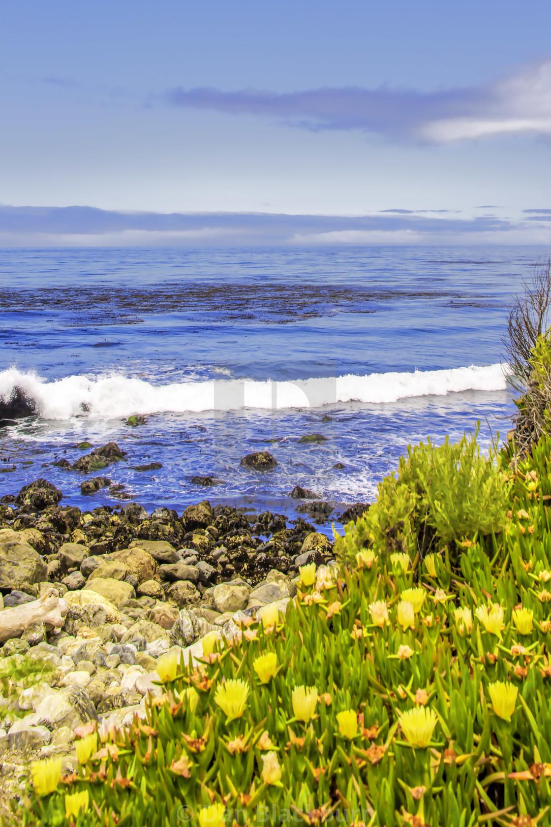 """Yellow Wildflowers Brighten Big Sur Coastline"" stock image"