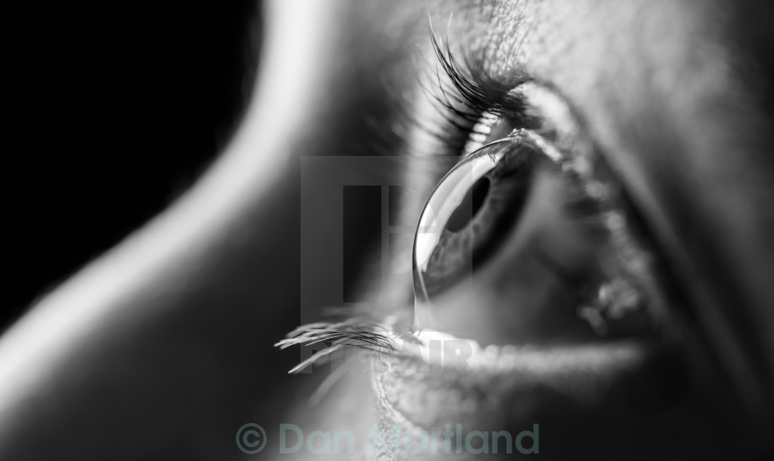"""Eye Eye"" stock image"