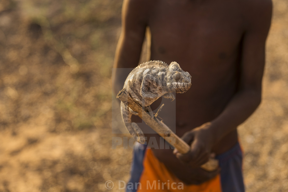 """""""Child playing with a chameleon in Madagascar, Africa"""" stock image"""