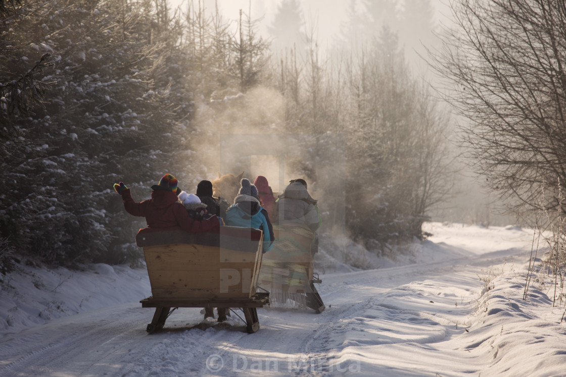 """beautyful sleigh in the winter trough the forest"" stock image"
