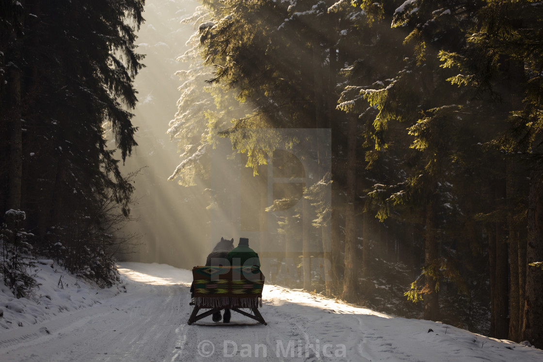 """""""beautyful sleigh in the winter trough the forest with beautiful background..."""" stock image"""