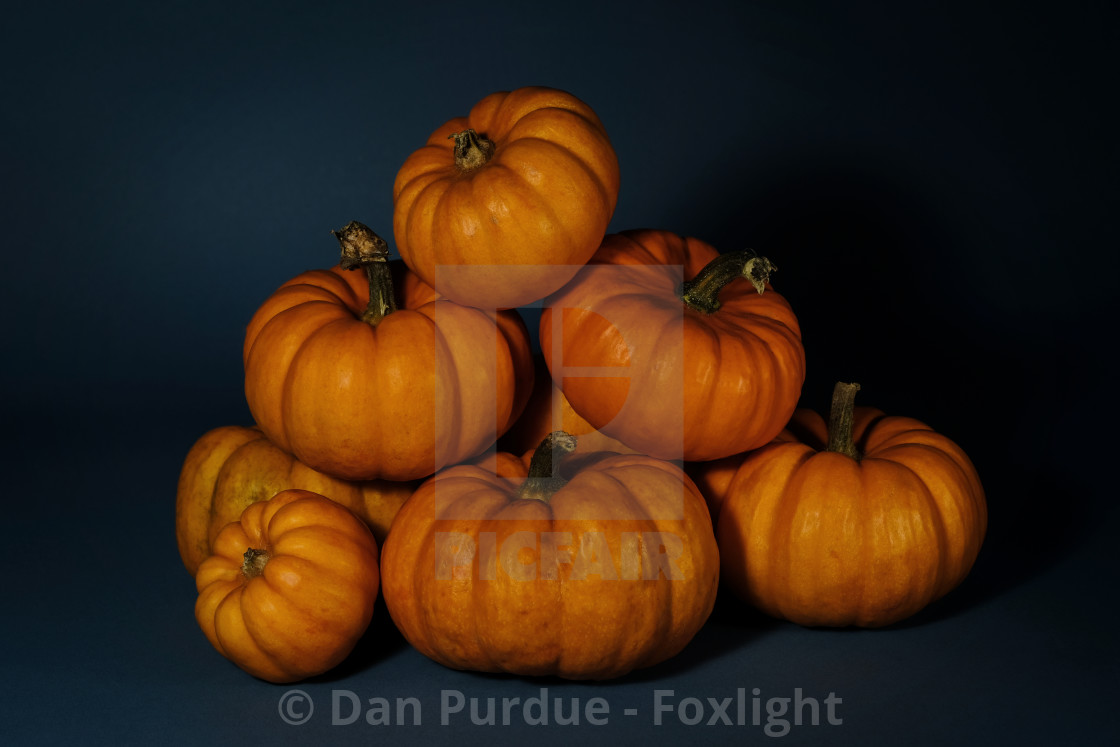 Dan Purdue Foxlight Digital Downloads Prints Powered By Picfair