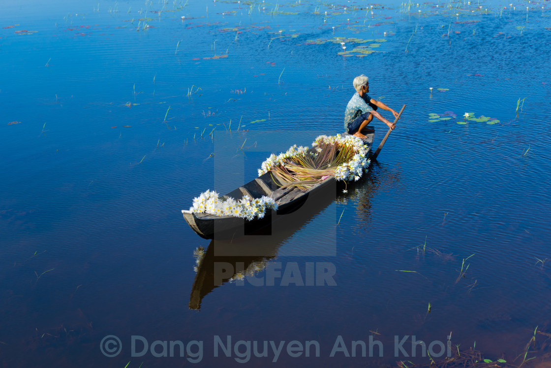 """""""An old woman collect water lilly in a lake - Vietnam"""" stock image"""