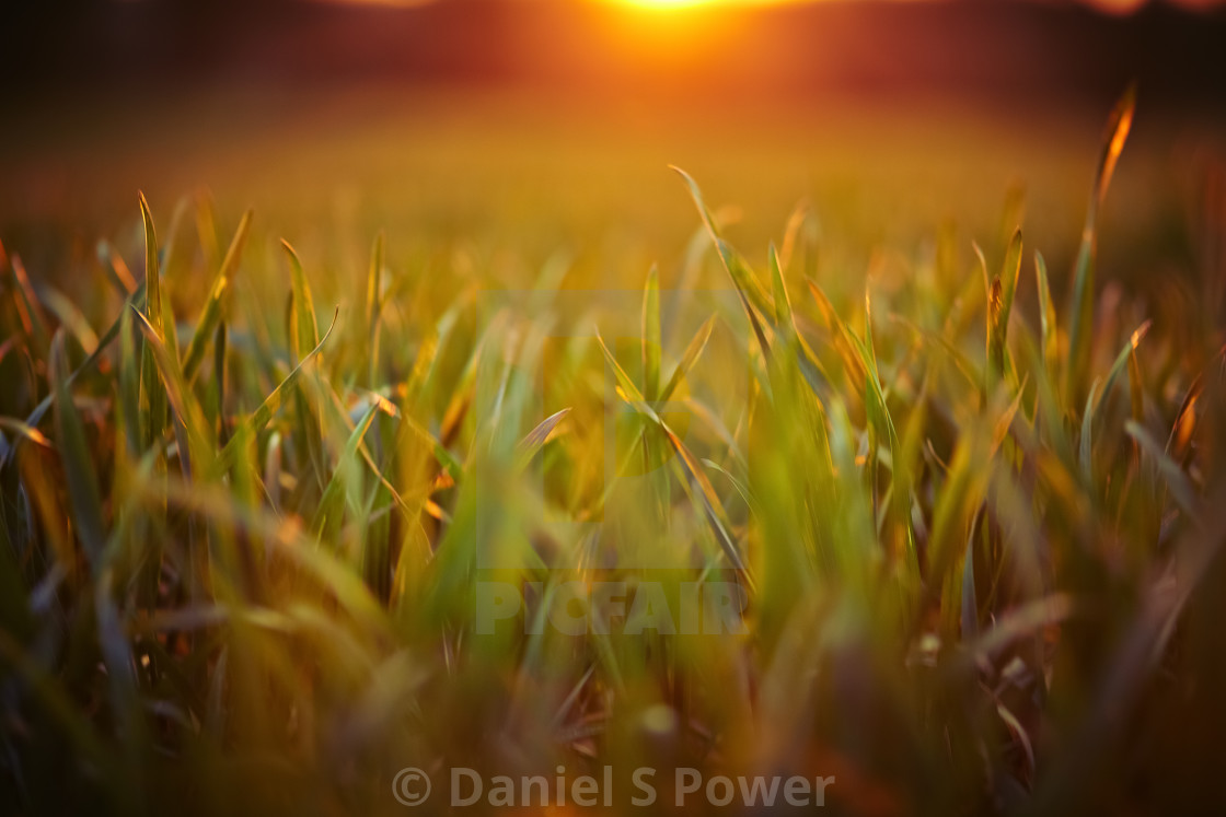 """Sunset over grass"" stock image"