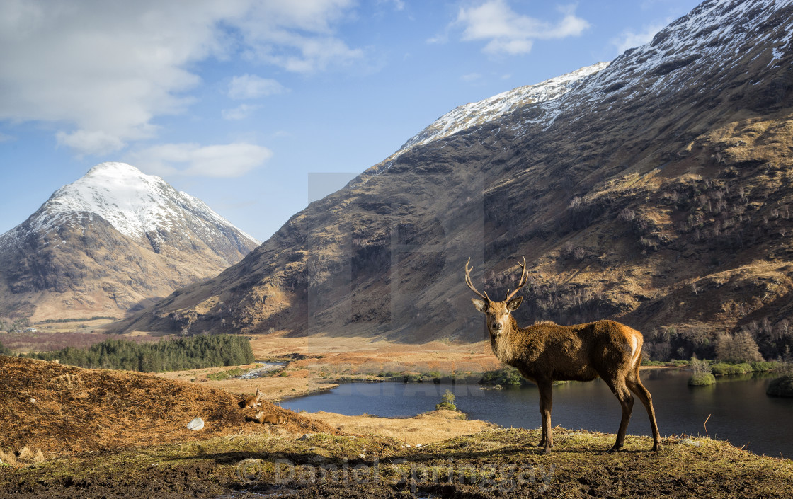 """King of the Glen"" stock image"
