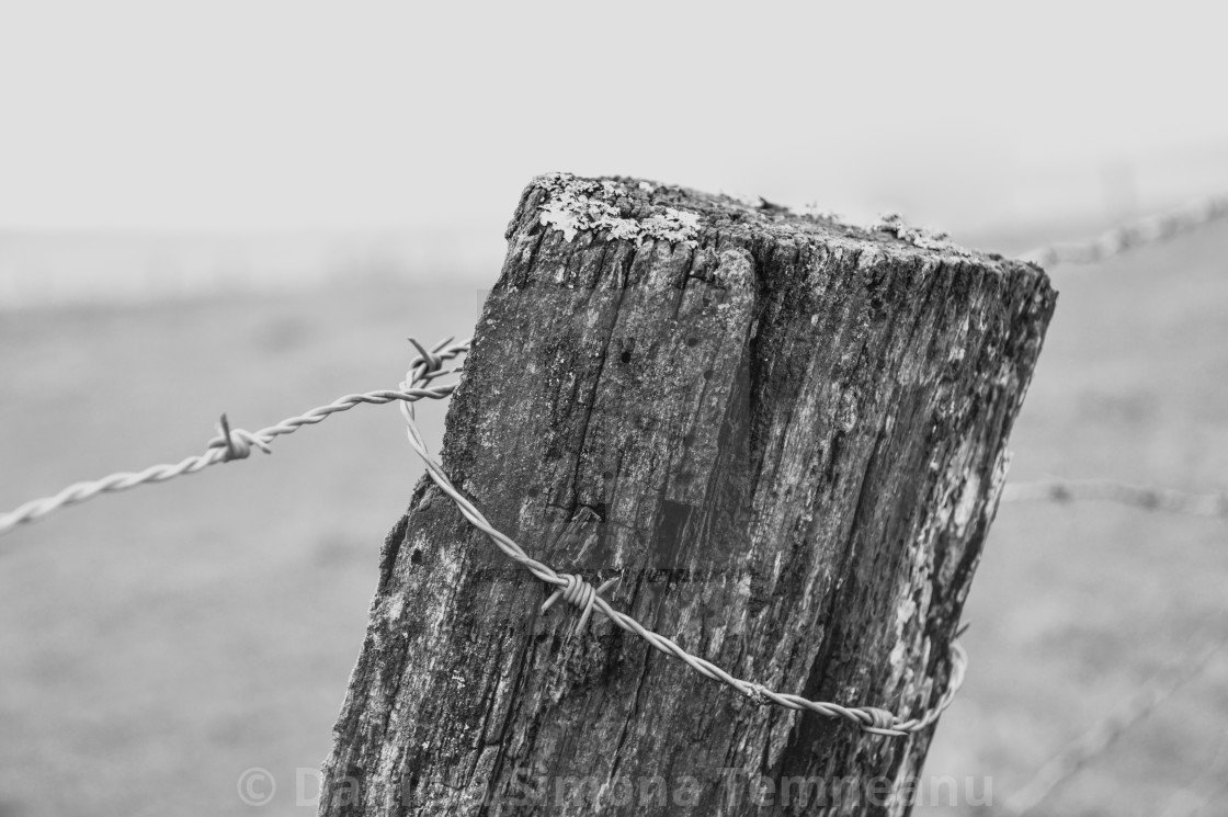 """""""Barbed wire on a wooden post"""" stock image"""