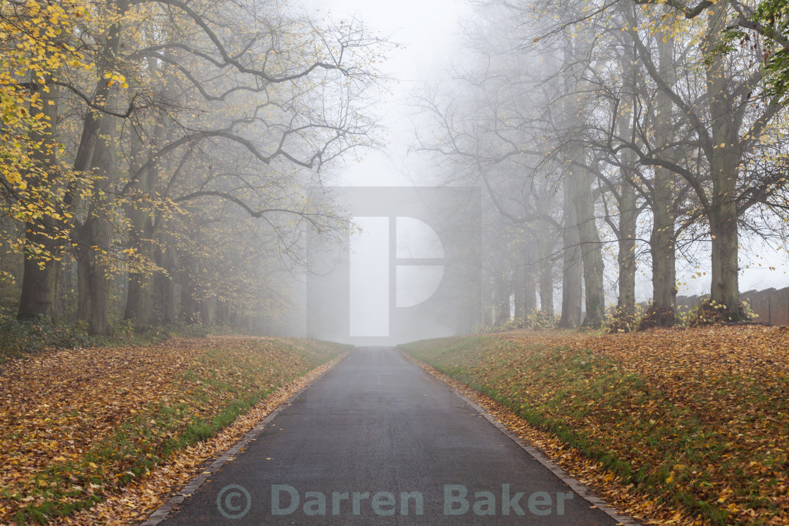 """Autumn Fall Tree Lined Road Leading Into Mist or Fog"" stock image"