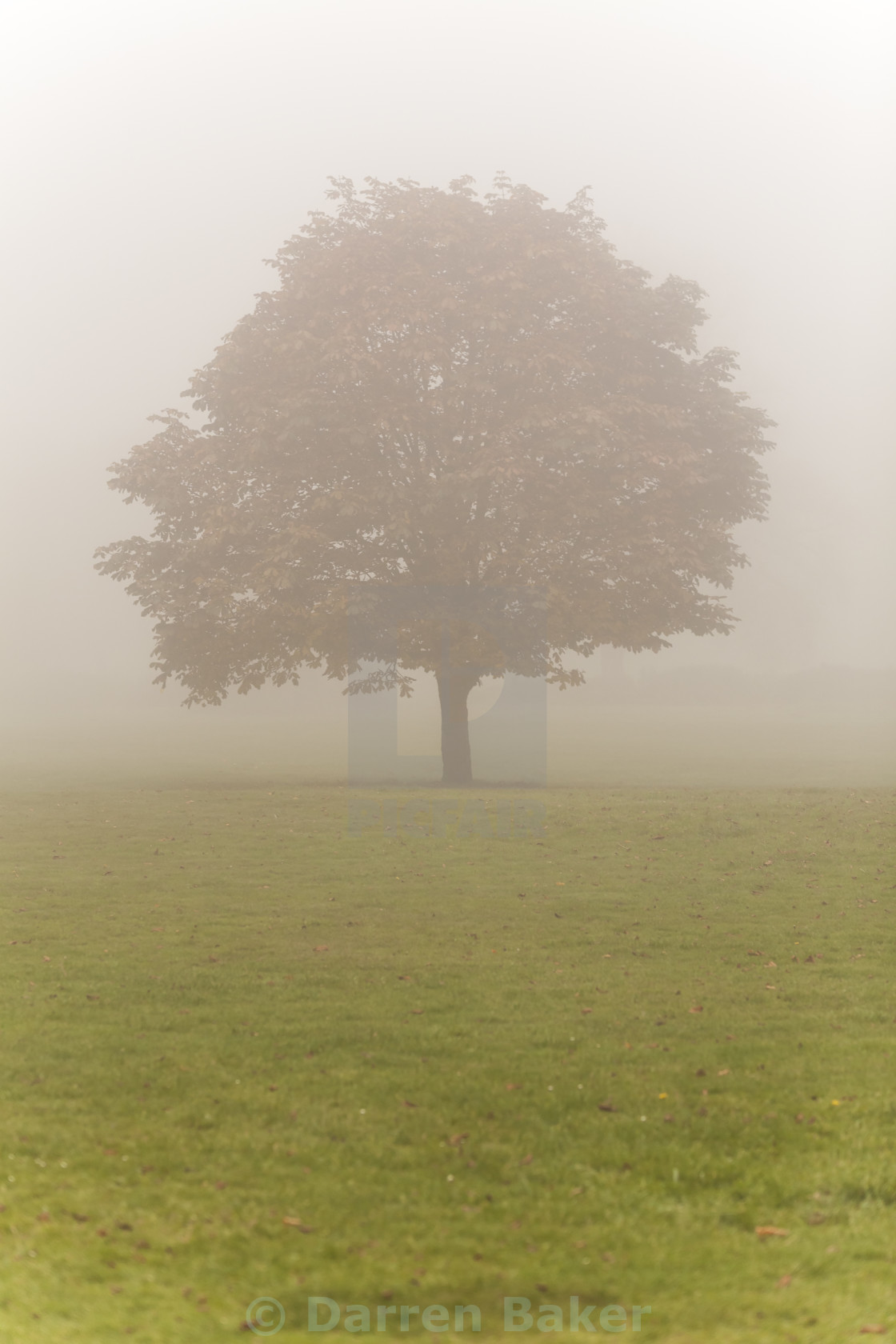 """Single Tree in Mist or Fog"" stock image"