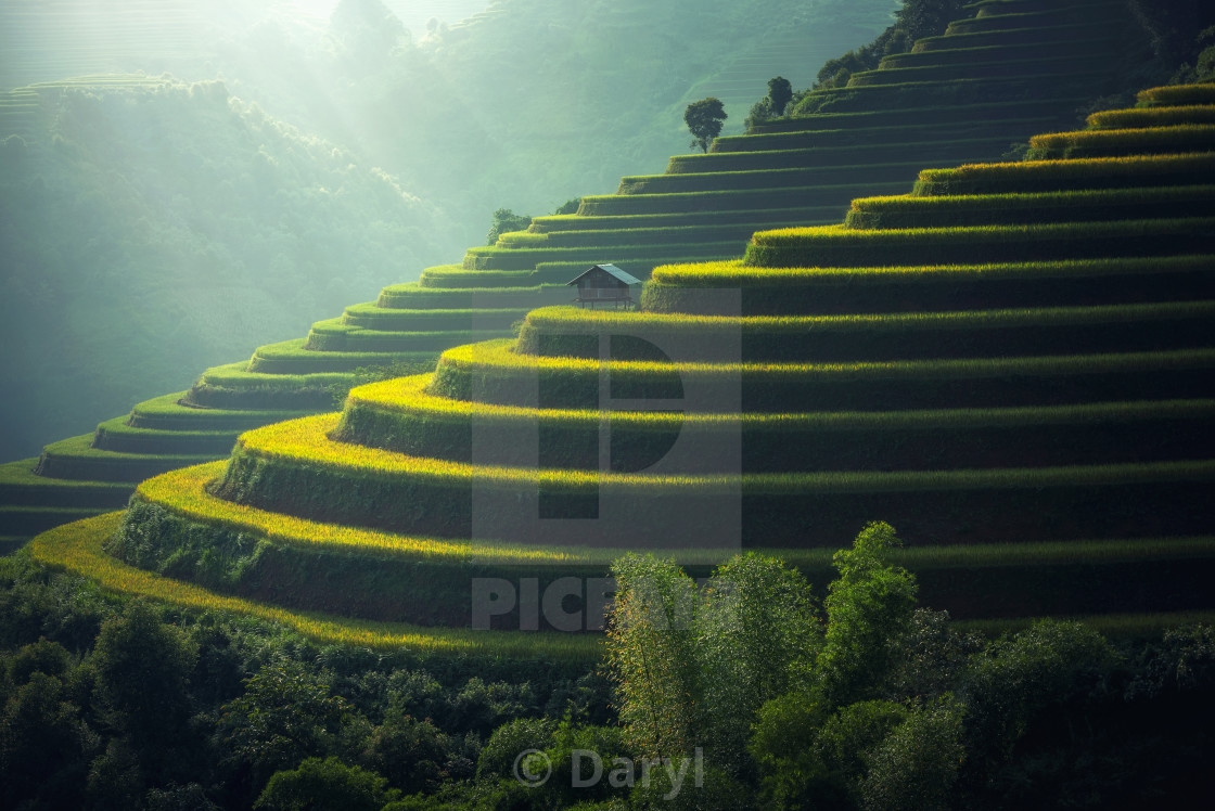 """Rice terraces Mu cang chai vietnam"" stock image"