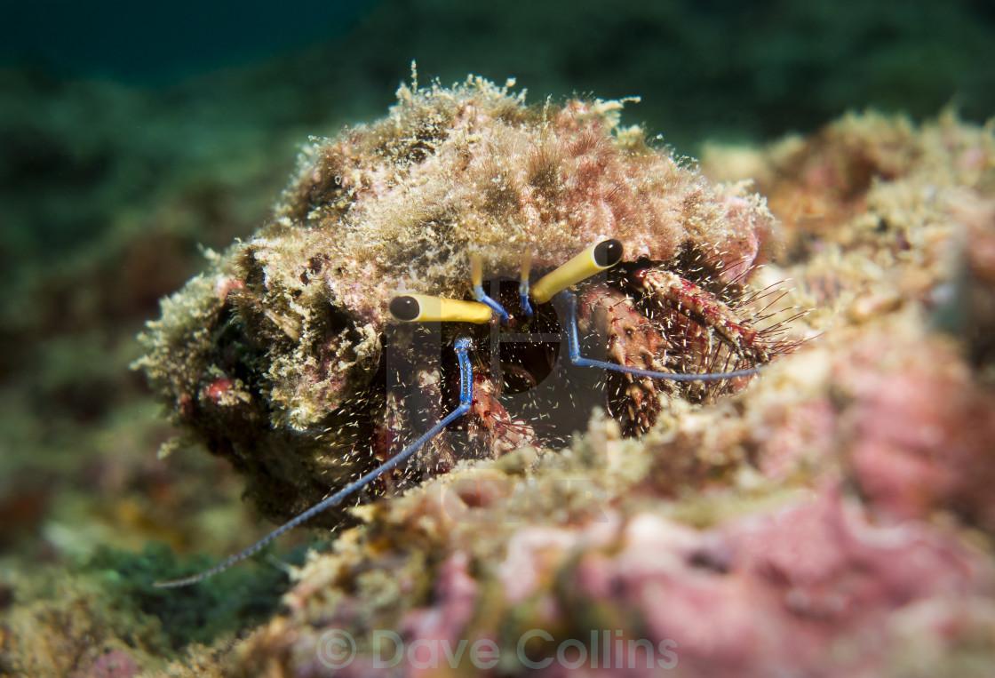 """Crab in Myanmar"" stock image"