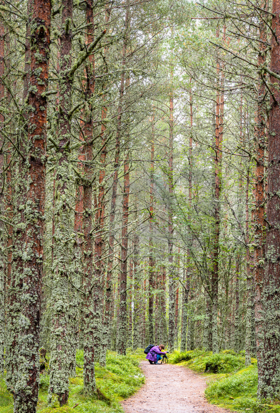 """A Macro Photographer at Work, Woodland, Scotland"" stock image"