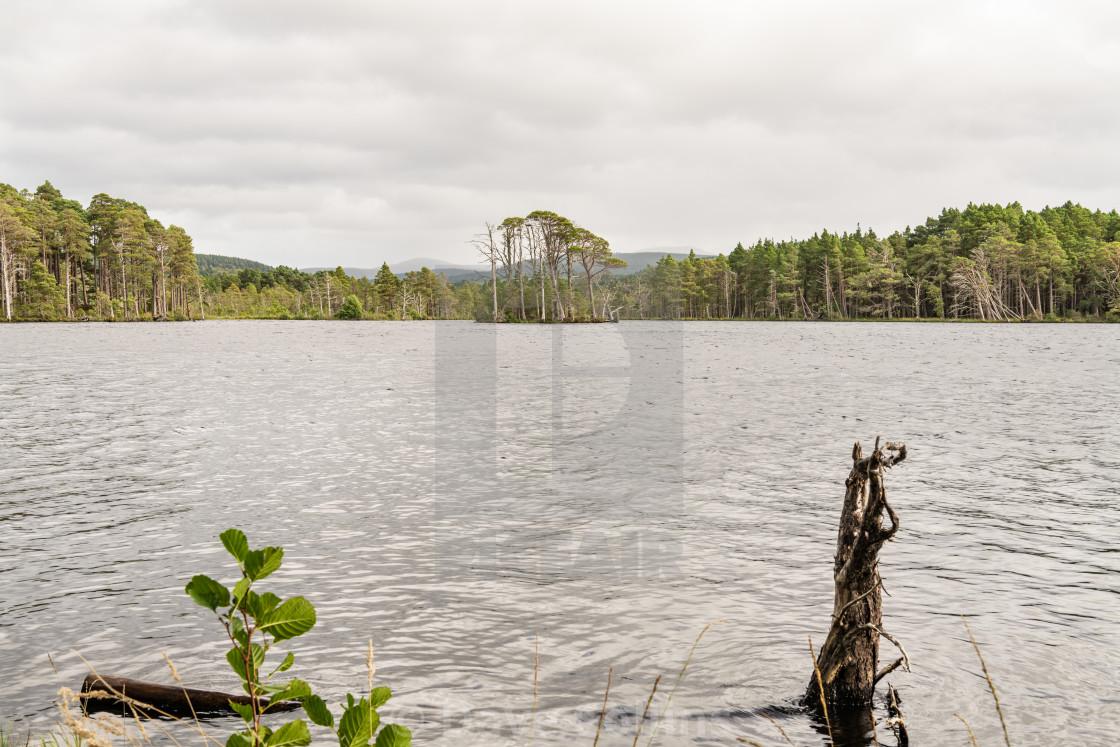 """Island in Loch Mallachie, Highland, Scotland"" stock image"