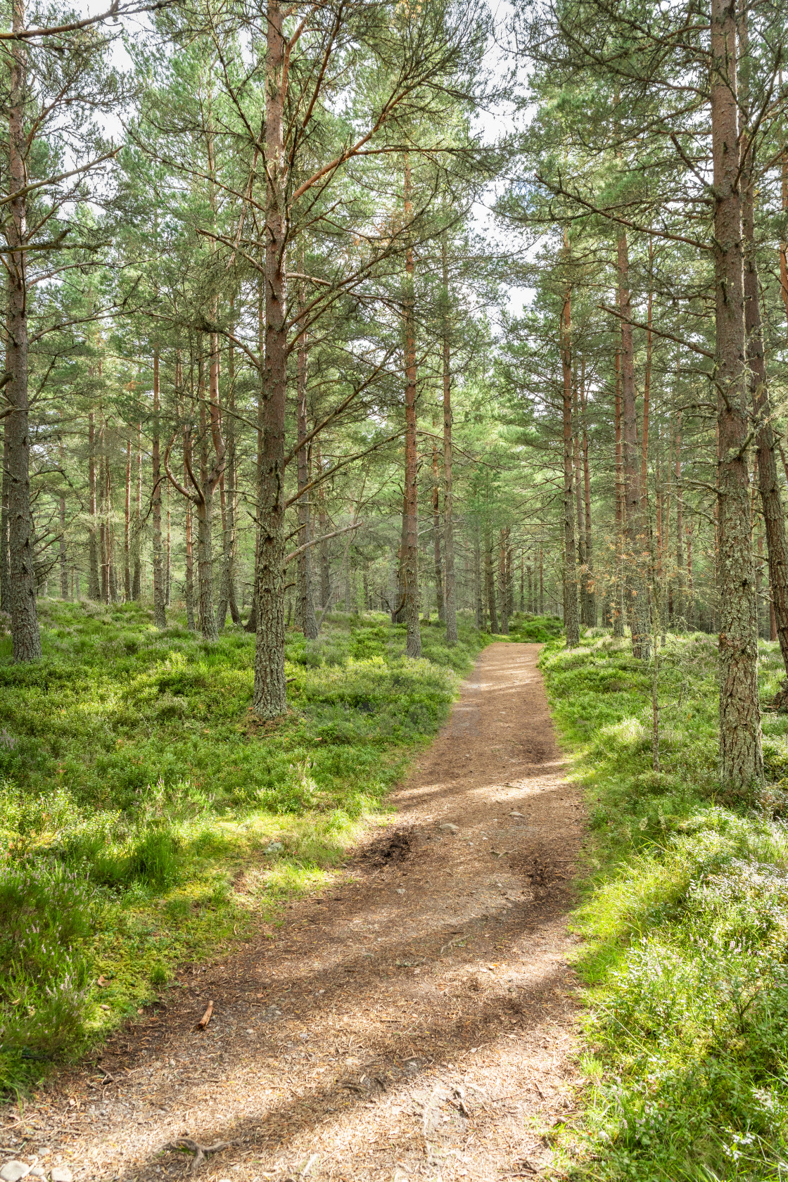 """A Woodland Foopath, Highlands, Scotland"" stock image"