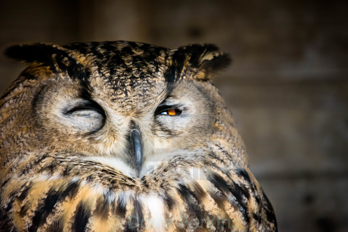 """Owl - Watching Me Watching You"" stock image"
