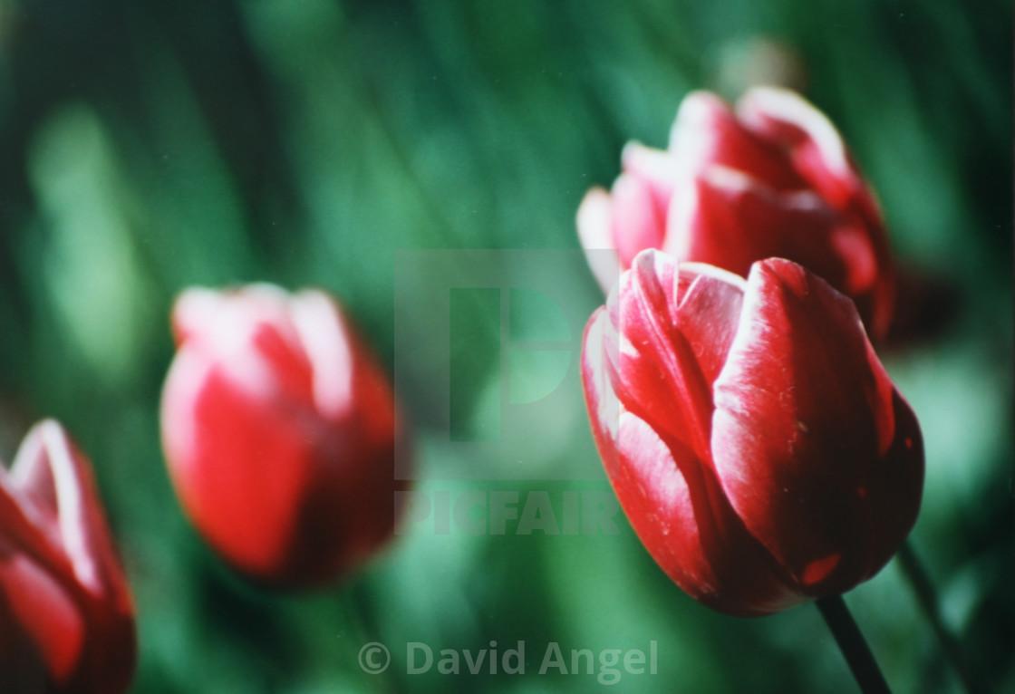 """Madrid flowers"" stock image"